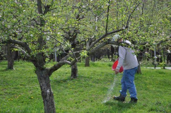 Хороший фруктовый сад – что может быть лучше?