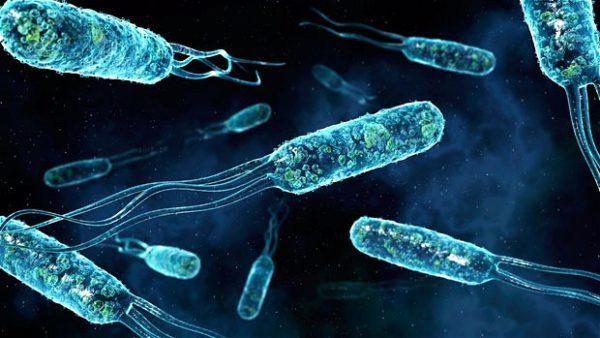 Увеличенное фото биоактивных бактерий